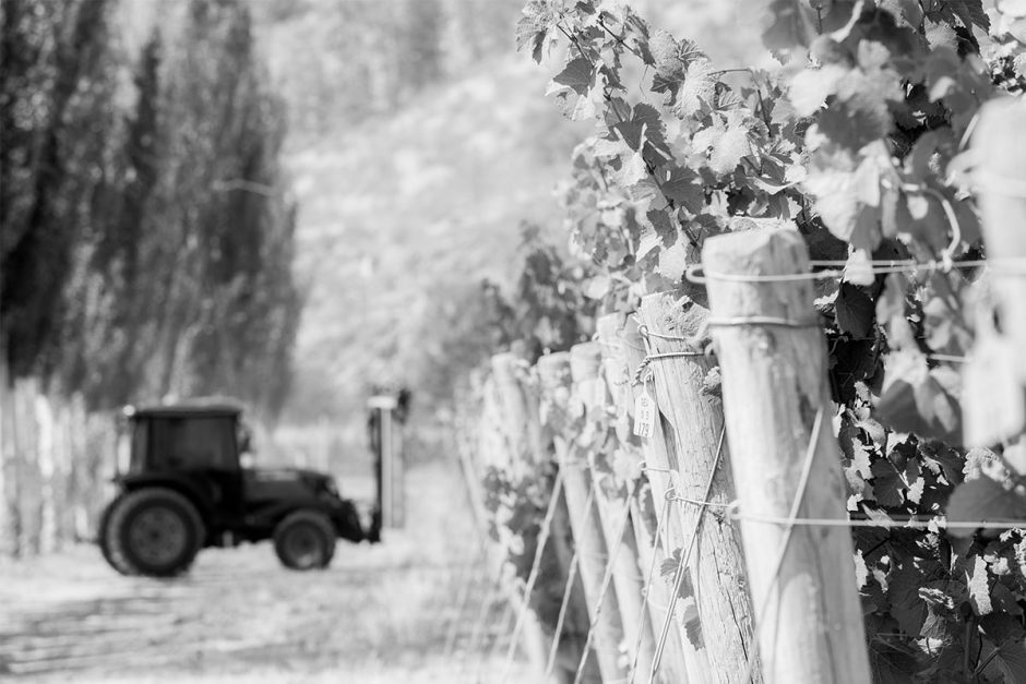 Tractor at the winery