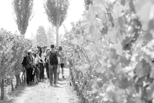 Undergraduate students at the winery